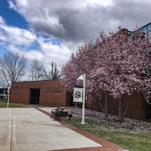 A tree blooms on the campus of Nashville State Community College in March 2021.